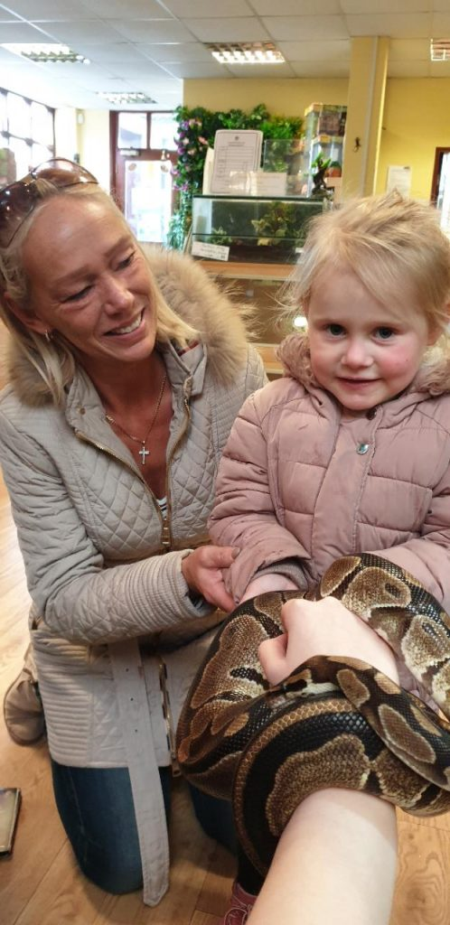 Royal Pythons, Perfect Pet Snakes